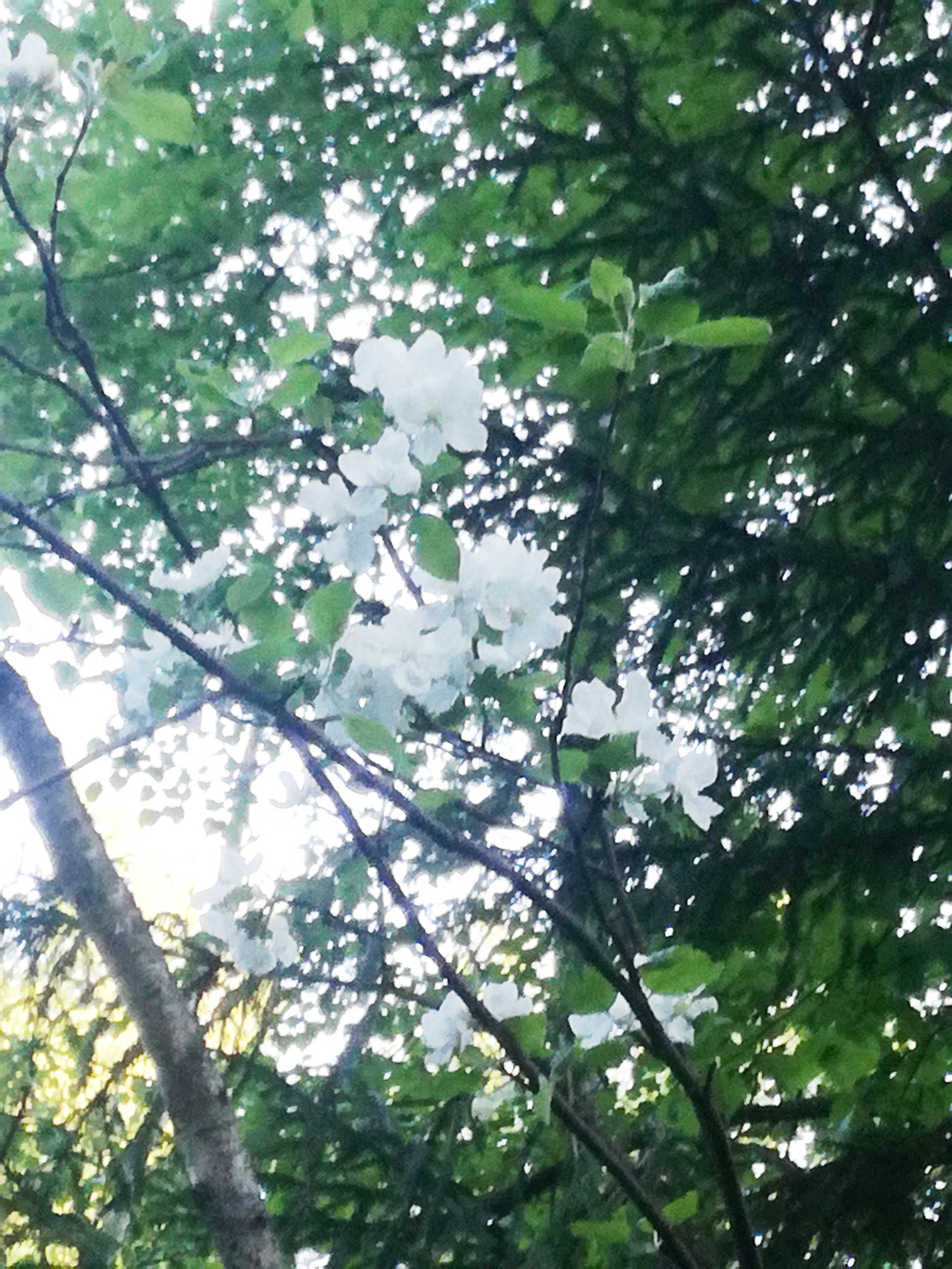 Лес, отдых